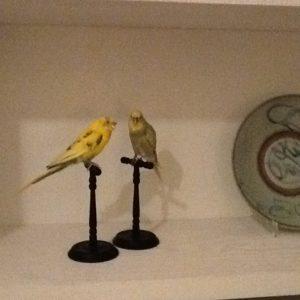stuffed canary birds on ebony stand